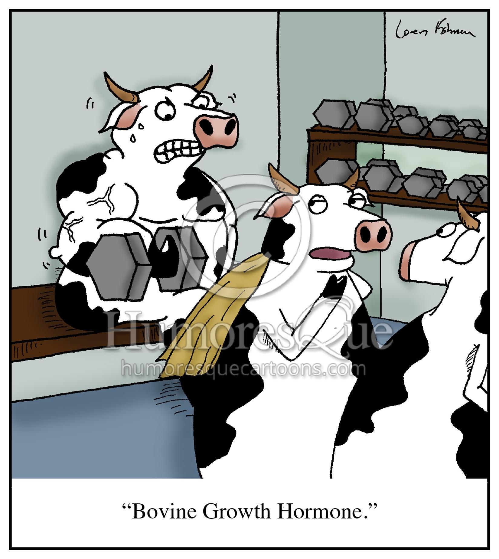 bovine growh hormone hgh bgh bodybuilding steroids cows cartoon